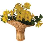 Kansas-Flower-basket-weaving-kit.jpg
