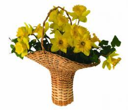 Kansas Flower Basket Kit
